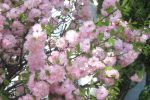 0flowers1